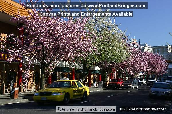 Portland Chinatown Spring Blossoms, Taxi