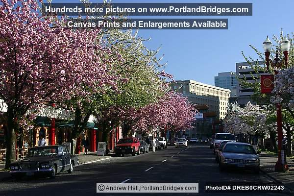 Portland Chinatown Spring Blossoms