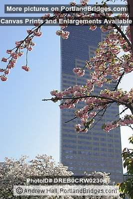 US Bancorp Tower, from Portland Chinatown, Spring Blossoms