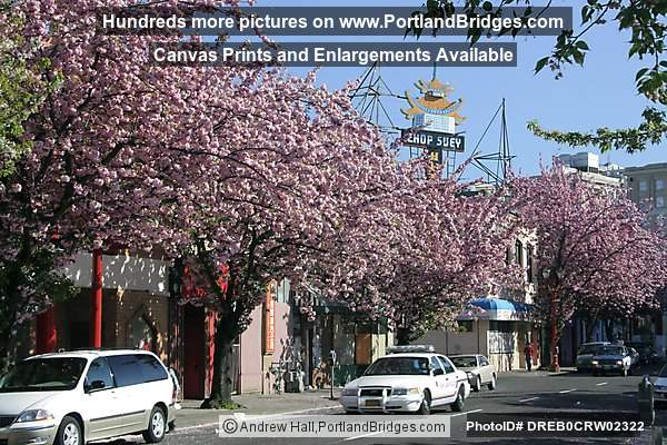 Portland Chinatown, Spring Blossoms