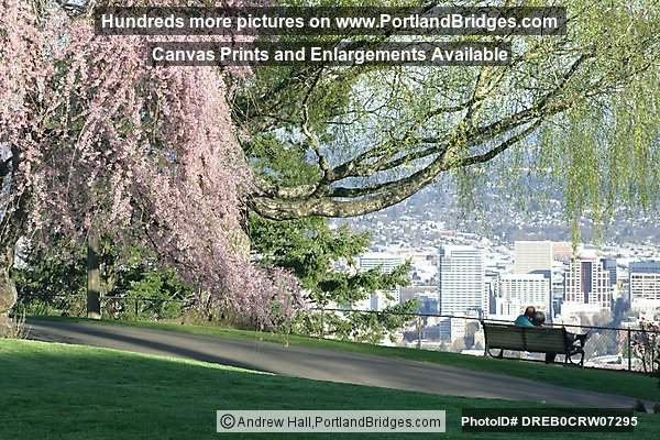 Blooming Tree, Pittock Mansion Grounds