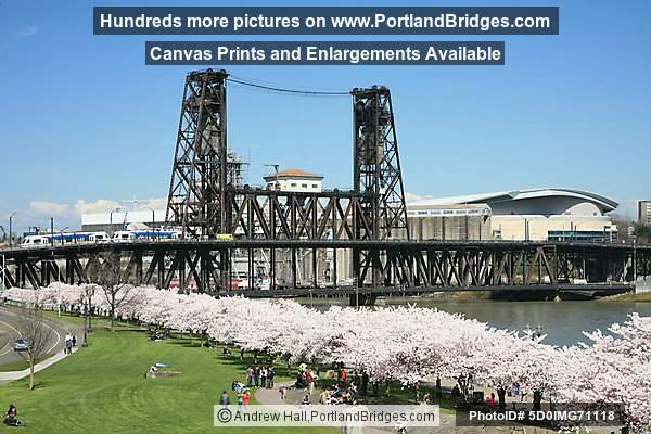 Waterfront Blossoms, Steel Bridge (Portland, Oregon)