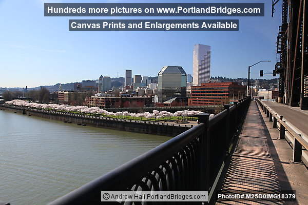 Downtown Portland, Cherry Blossoms, View from Steel Bridge