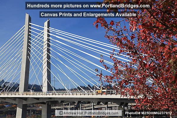 Tilikum Crossing, Fall Leaves (Portland, Oregon)
