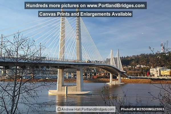 Tilikum Crossing, Morning (Portland, Oregon)