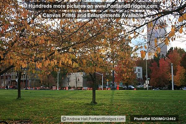 Fall Leaves, Tom McCall Waterfront Park (Portland, Oregon)