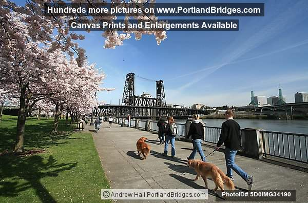 McCall Waterfront Park Blossoms, Steel Bridge (Portland, Oregon)