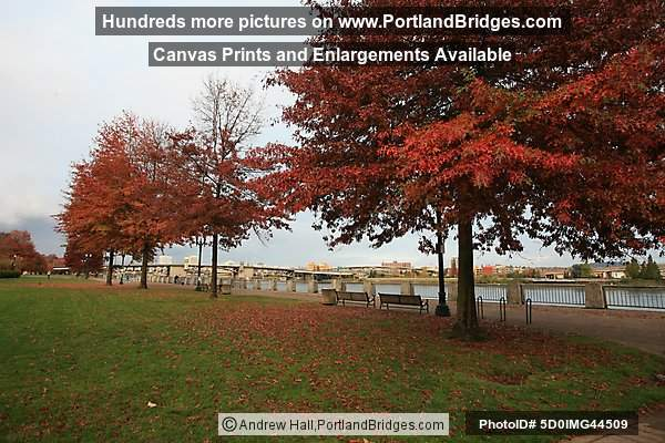 Fall Leaves, Tom McCall Waterfront Park