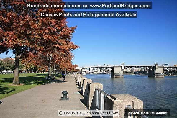 Tom McCall Waterfront Park, Fall Leaves, Morrison Bridge (Portland, Oregon)