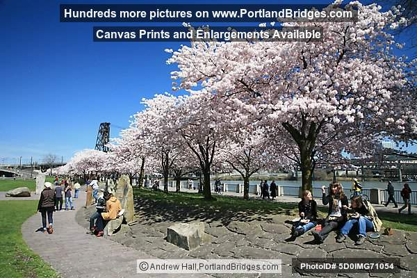 Waterfront Blossoms, Tom McCall Waterfront Park (Portland, Oregon)