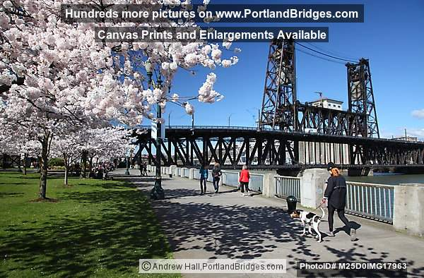 Portland Waterfront Cherry Blossoms, Steel Bridge