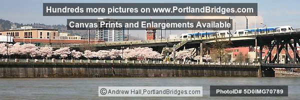 Waterfront Blossoms, Union Station, MAX Train, Fremont Bridge (Portland, Oregon)