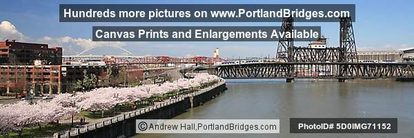 Waterfront Blossoms, Steel Bridge, Two MAX Trains (Portland, Oregon)
