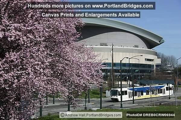 Spring Blossoms Max Train Rose Garden Arena Portland Oregon Photo Dreb0crw06944
