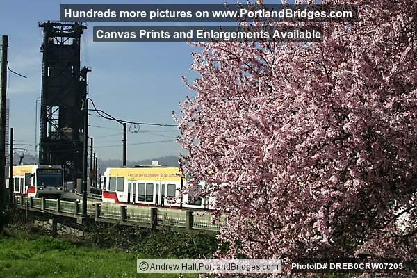MAX Train, Steel Bridge, Spring Blossoms (Portland, Oregon)
