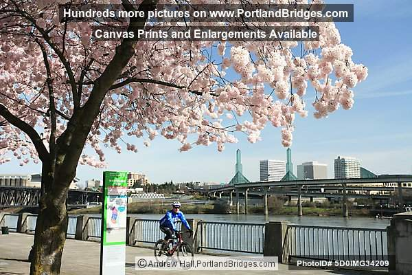 McCall Waterfront Park Blossoms (Portland, Oregon)
