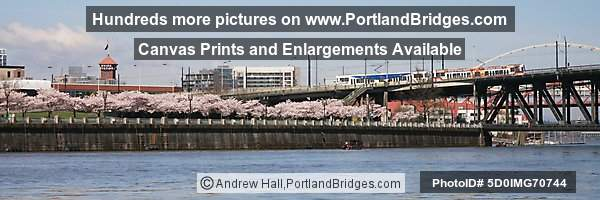 Waterfront Blossoms, Union Station, MAX Train (Portland, Oregon)