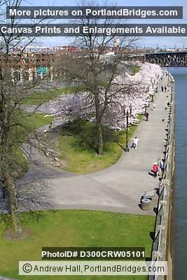 Waterfront Park, early spring, Portland