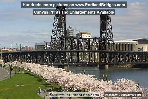 Steel Bridge and Cherry Blossoms