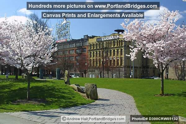 Waterfront Blossoms, Tom McCall Waterfront Park, Portland