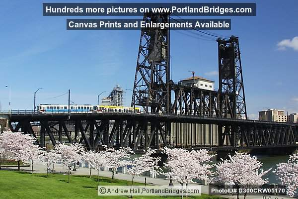 Steel Bridge with Waterfront Blossoms and MAX Train (Portland, Oregon)