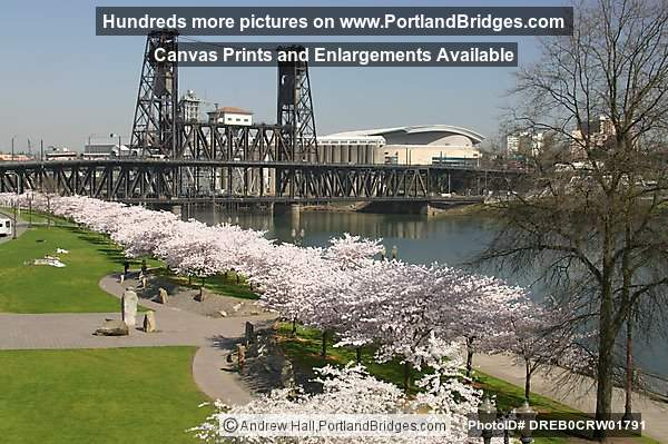 Spring Blossoms, Waterfront Park, Steel Bridge (Portland, Oregon)