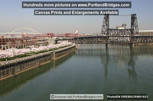 Willamette River, Steel Bridge, Blossoms (Portland, Oregon)
