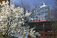 Made In Oregon Sign, Spring Blossoms
