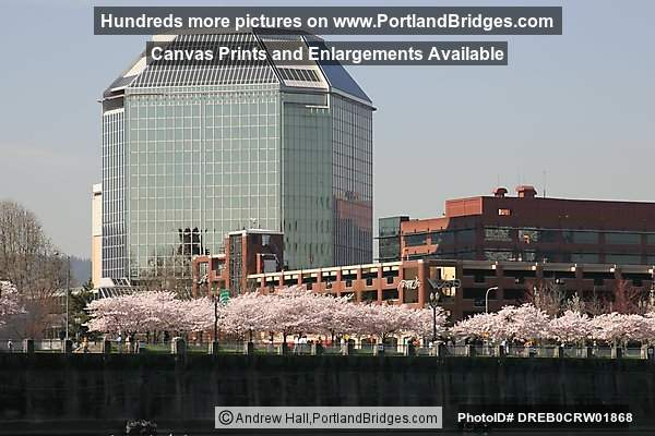 Waterfront Blossoms, Portland Buildings