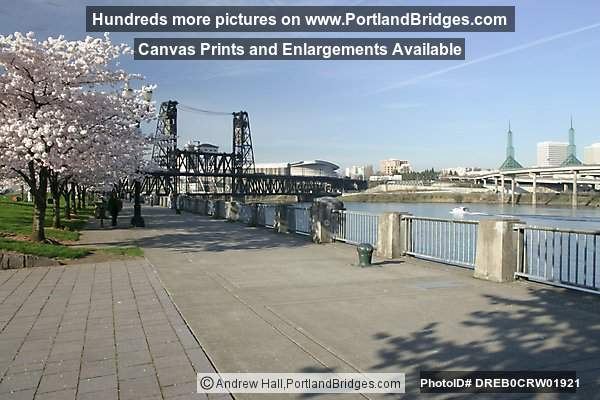 Waterfront, Blossoms, Steel Bridge (Portland, Oregon)