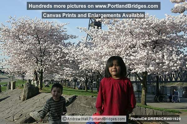 Kids Waterfront Park, Spring Blossoms (Portland, Oregon)