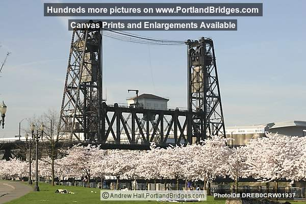 Steel Bridge, Waterfront Blossoms