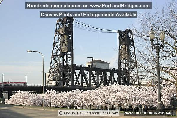 Steel Bridge, Waterfront Blossoms (Portland, Oregon)