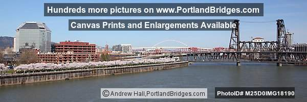 Portland Steel Bridge, Cherry Blossoms, Panorama