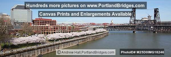 Portland Steel Bridge, Waterfront Cherry Blossoms, Panorama